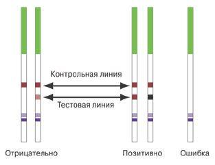 Определение дня овуляции по тест-полоскам рисунок