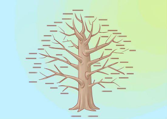 Генеалогическое дерево своими руками шаг 1