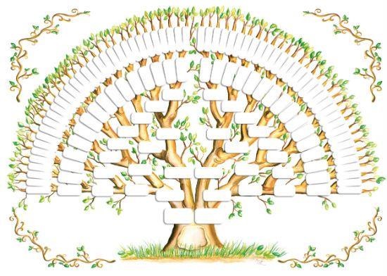 Схемы генеалогического дерева 7