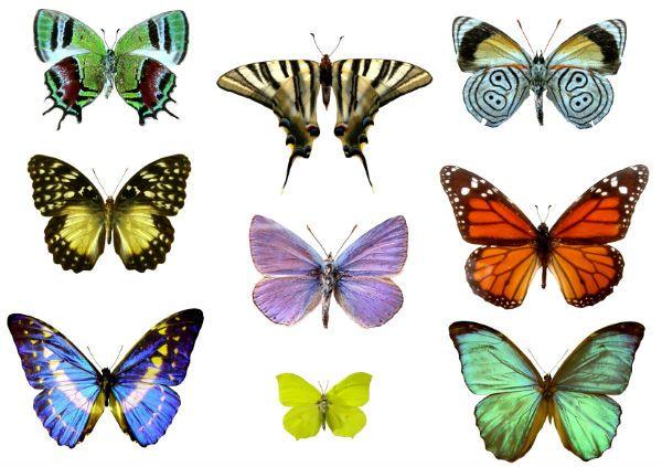 Шаблоны бабочек фото