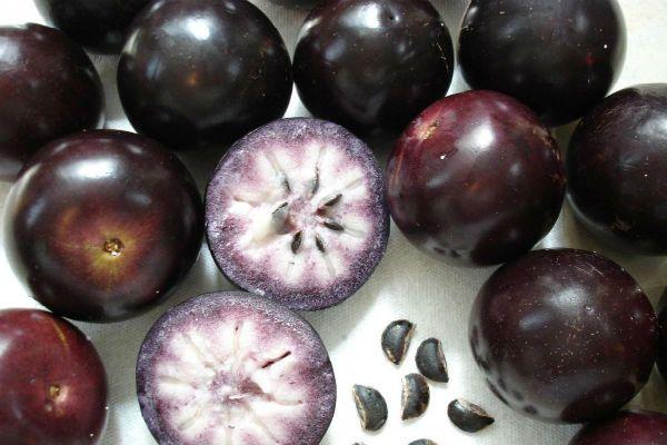 Хризофиллум (Звездное яблоко) фото