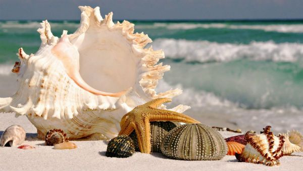 Дары моря из Доминиканы фото