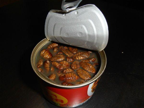 Консервы с личинками шелкопряда фото