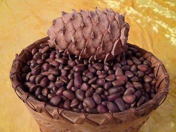 Кедровые орешки и шишки фото