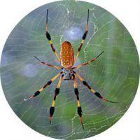 О чем говорят самые известные приметы и суеверия про пауков
