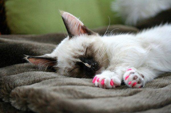 Кошка в антицарапках фото