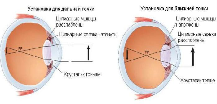 Процесс аккомодации глаза