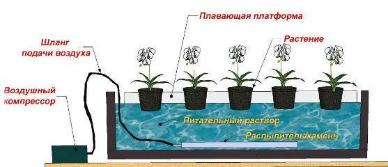 Система водных культур в гидропонике фото