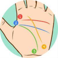 Линии на руках и их значение, пояснение с фото