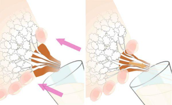 Как сцеживать грудного молоко руками фото