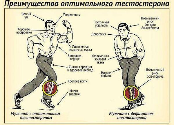 Функции тестостерона в организме мужчины фото