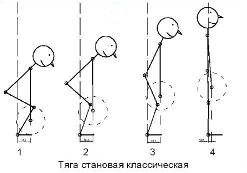 Схема выполнения классической становой тяги фото