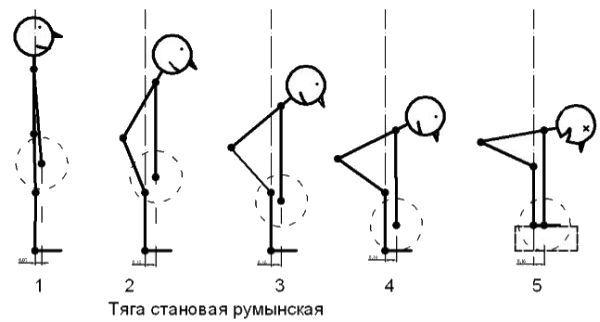 Схема выполнения румынской становой тяги фото