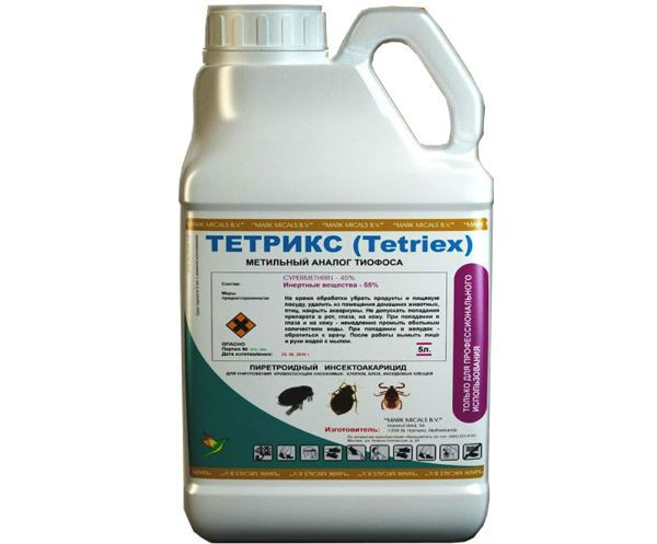 Тетрикс фото