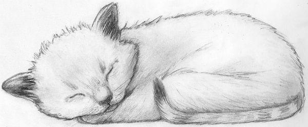 Кот спит фото