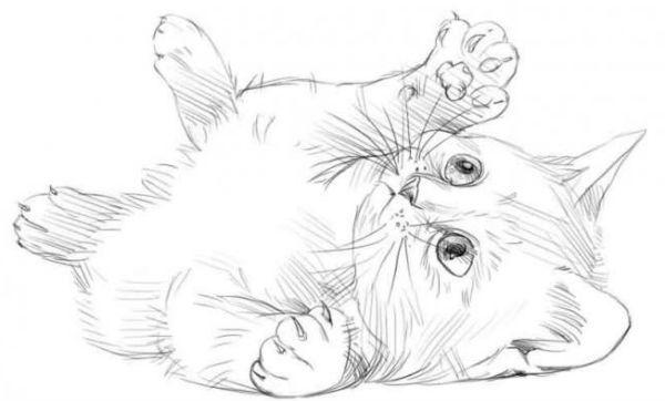 Кот фото