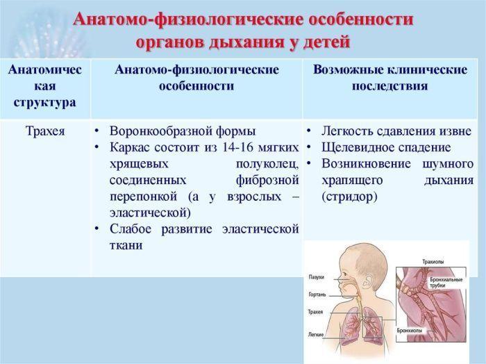 Органы дыхания ребенка фото