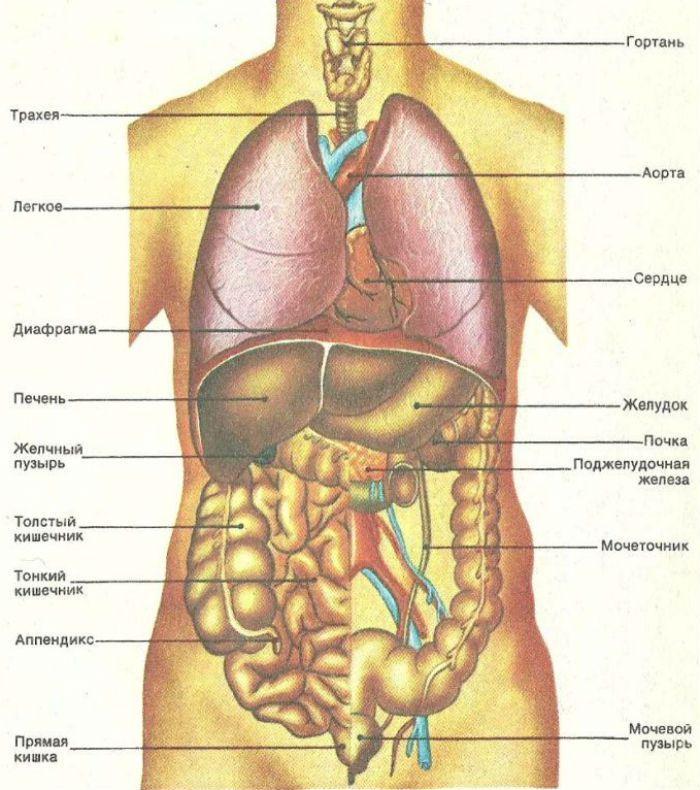Органы справа фото