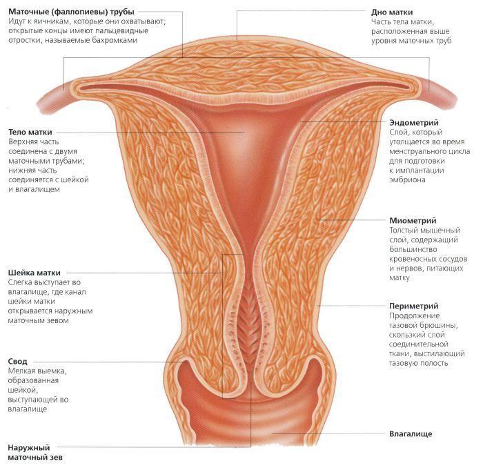 беременность после дисплазии шейки матки 2 степени