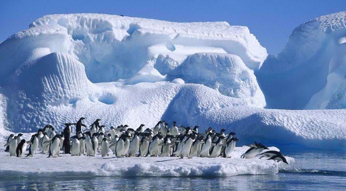 Антарктическая пустыня фото