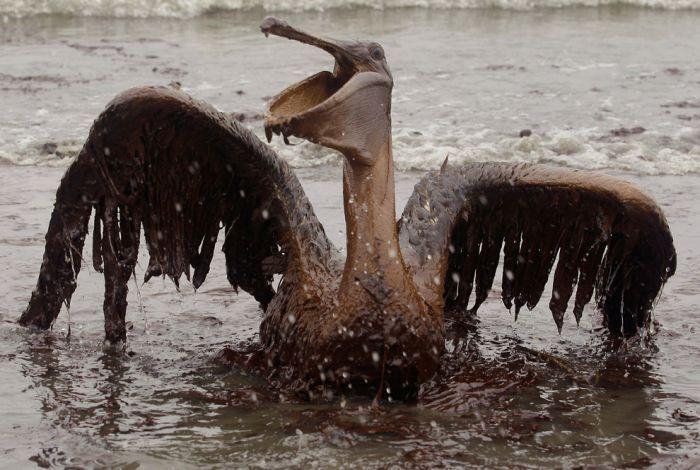 Экологическая катастрофа фото