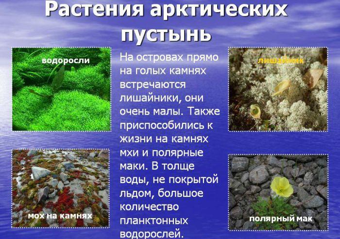 Растения Арктики фото