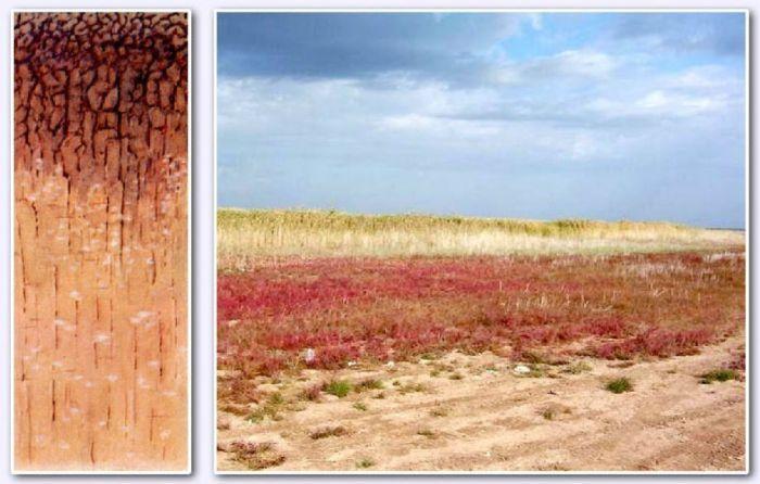 Серо-бурая почва фото