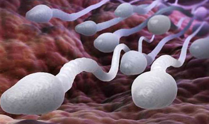 Сперматозоиды фото