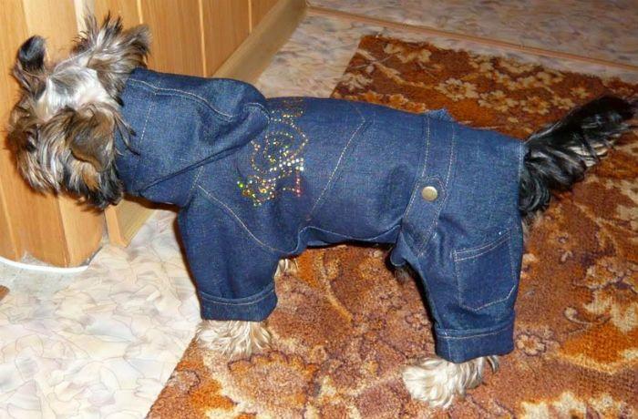 щенок в комбезе джинсовом фото