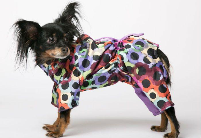 собака в одежде фото