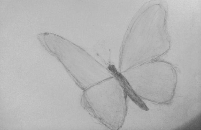бабочка-2