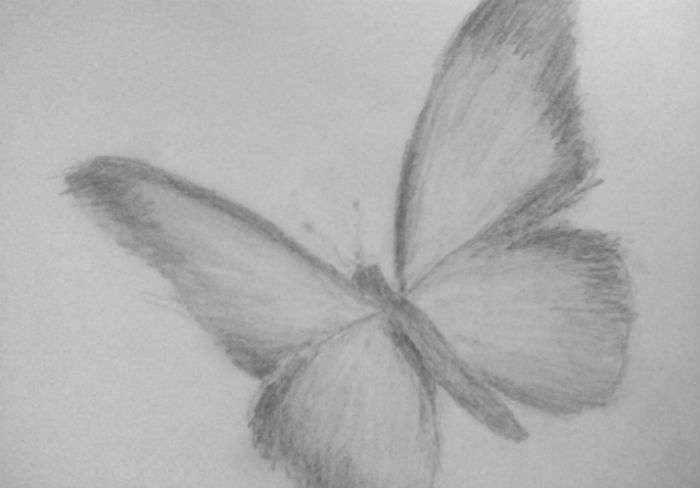 бабочка-3