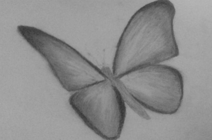 бабочка-4
