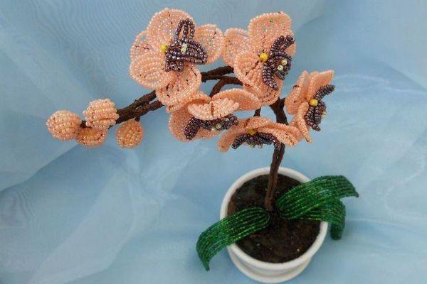Готовая орхидея фото