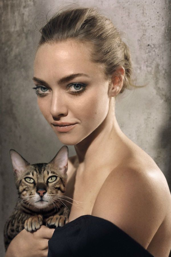 Съемка с котом фото