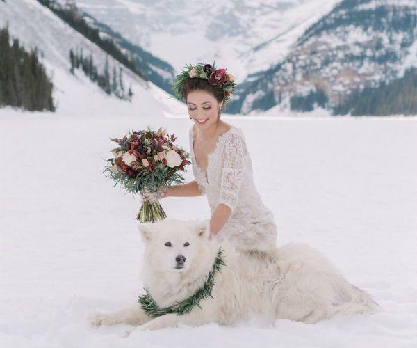 Невеста и хаски фото