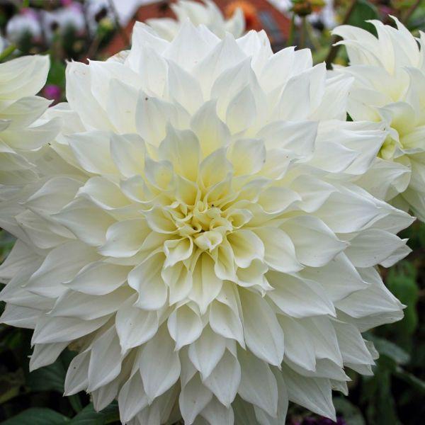 Fleurel фото