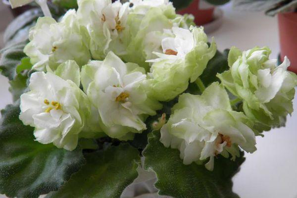 Весенняя роза (Spring rose) фото