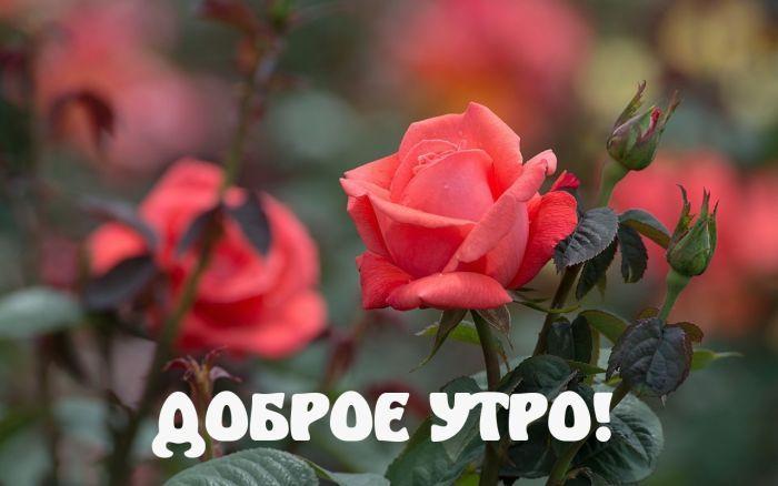 доброе утро цветы