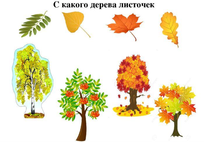 Лист с дерева фото