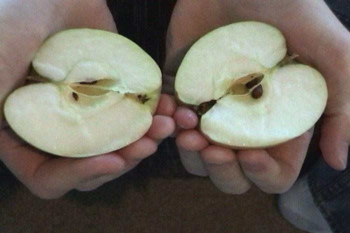 Фокус с яблоком фото