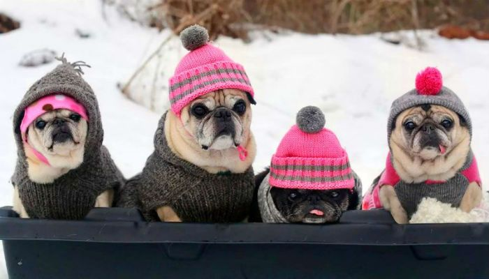 фото собак в вязаных вещах фото