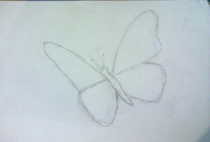 бабочка-1