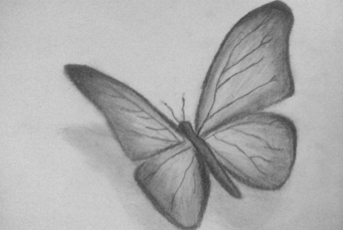 бабочка-5