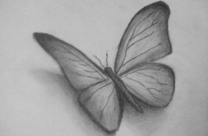 бабочка-6