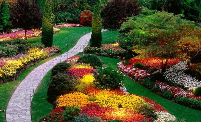 цветочные грядки фото