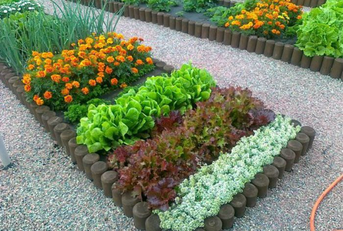 соседство овощей и цветов фото
