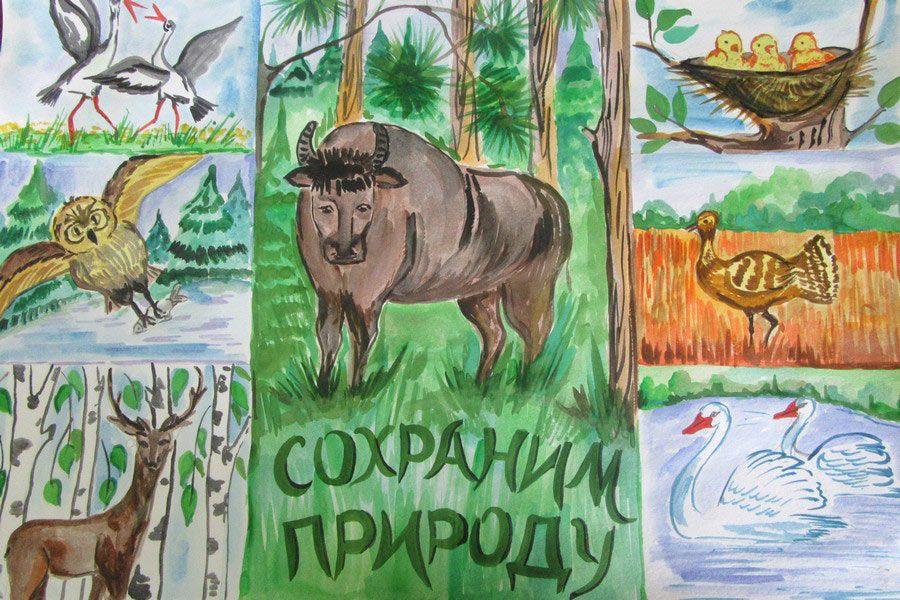 Защита и охрана природы рисунок 8 фото