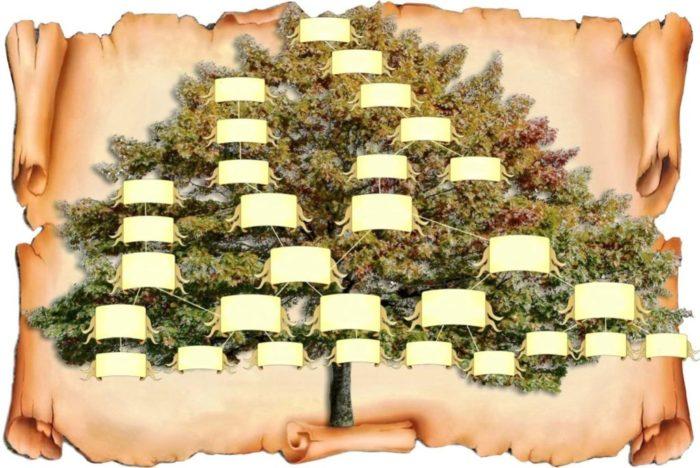 Шаблон родословное дерево фото